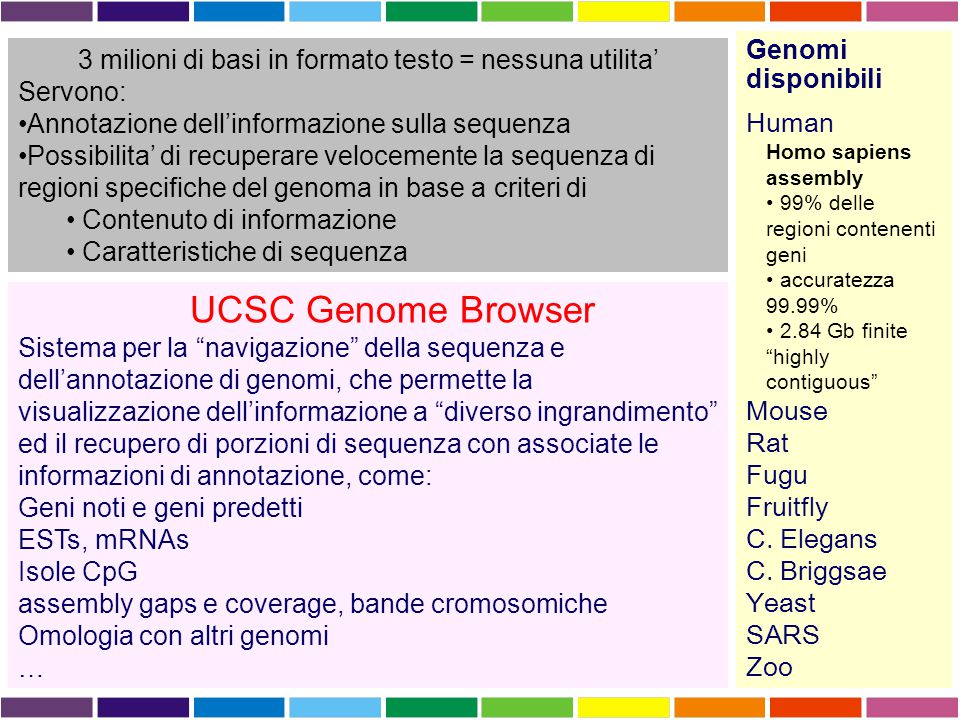 3 milioni di basi in formato testo = nessuna utilita' Servono: Annotazione dell'informazione sulla sequenza Possibilita' di recuperare velocemente la sequenza di regioni specifiche del genoma in base a criteri di Contenuto di informazione Caratteristiche di sequenza Genomi disponibili Human Homo sapiens assembly 99% delle regioni contenenti geni accuratezza 99.99% 2.84 Gb finite highly contiguous Mouse Rat Fugu Fruitfly C.