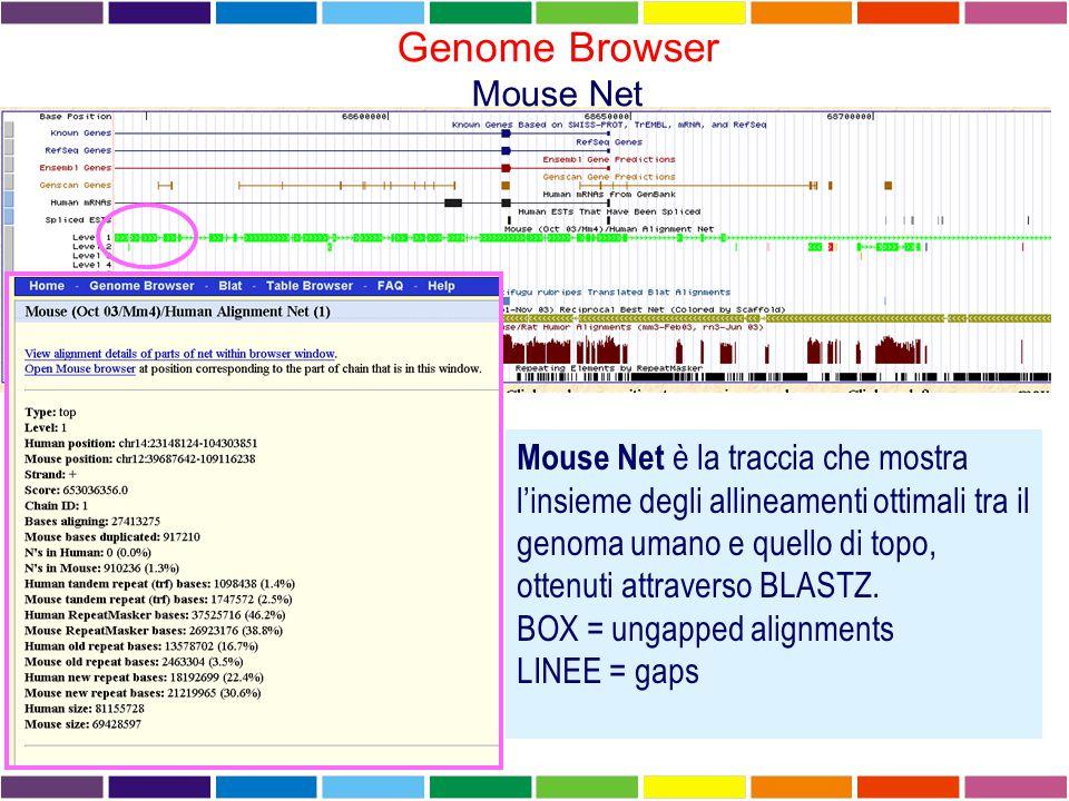 Genome Browser Mouse Net Mouse Net è la traccia che mostra l'insieme degli allineamenti ottimali tra il genoma umano e quello di topo, ottenuti attraverso BLASTZ.