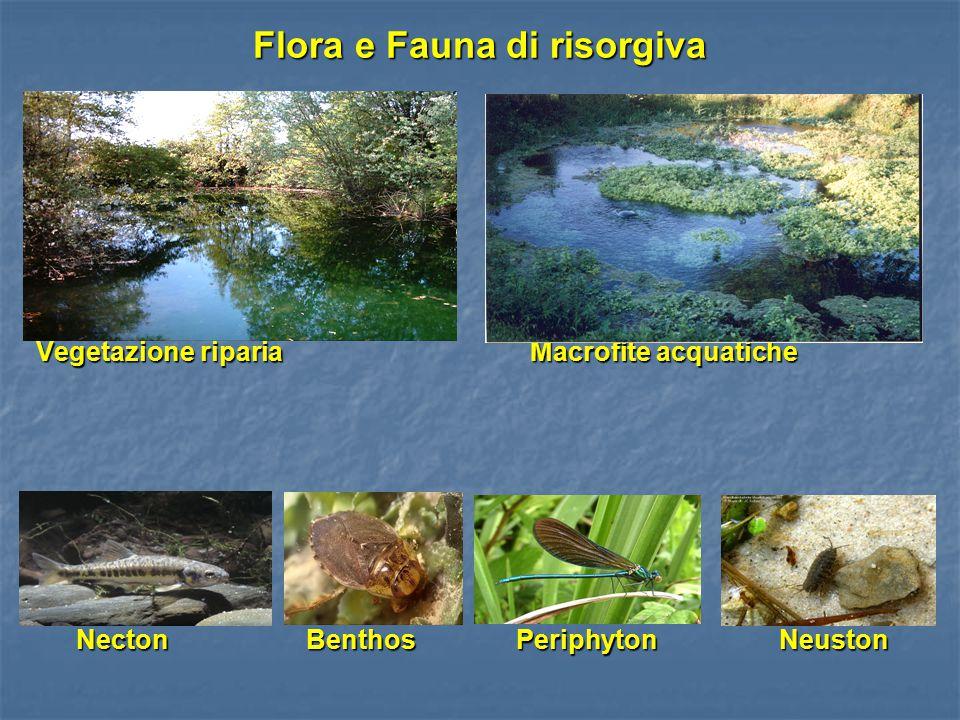 Flora e Fauna di risorgiva Vegetazione riparia Macrofite acquatiche Necton Benthos Periphyton Neuston Necton Benthos Periphyton Neuston