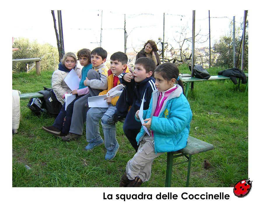 IL QUIZ DEL NATURALISTA I 16 bambini vengono divisi in 2 squadre: le Coccinelle e le Margherite. Ciascuna squadra elegge un portavoce che, dopo una br