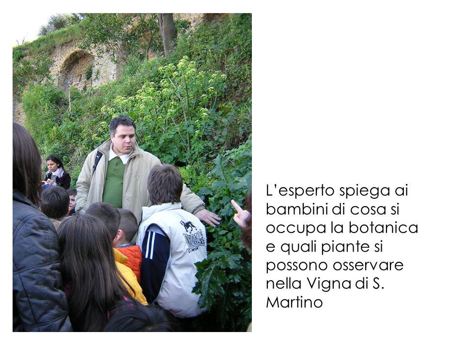 Guidati dagli operatori e accompagnati dal Prof. Matteucig, i bambini cominciano l'esplorazione della Vigna di S. Martino, alla scoperta della natura