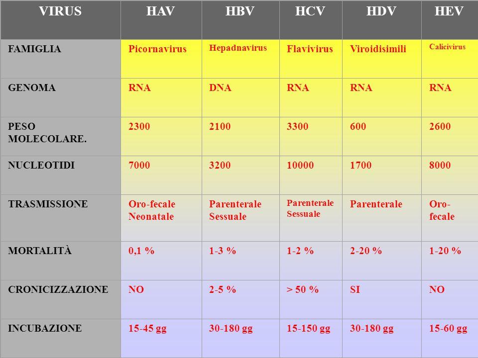 VIRUSHAVHBVHCVHDVHEV FAMIGLIAPicornavirus Hepadnavirus FlavivirusViroidisimili Calicivirus GENOMARNADNARNA PESO MOLECOLARE.