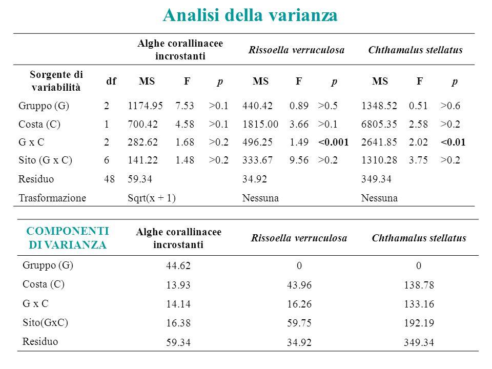 Alghe corallinacee incrostanti Rissoella verruculosaChthamalus stellatus Sorgente di variabilità dfMSFp Fp Fp Gruppo (G)21174.957.53>0.1440.420.89>0.51348.520.51>0.6 Costa (C)1700.424.58>0.11815.003.66>0.16805.352.58>0.2 G x C2282.621.68>0.2496.251.49<0.0012641.852.02<0.01 Sito (G x C)6141.221.48>0.2333.679.56>0.21310.283.75>0.2 Residuo4859.3434.92349.34 TrasformazioneSqrt(x + 1)Nessuna COMPONENTI DI VARIANZA Alghe corallinacee incrostanti Rissoella verruculosaChthamalus stellatus Gruppo (G) 44.6200 Costa (C) 13.9343.96138.78 G x C 14.1416.26133.16 Sito(GxC) 16.3859.75192.19 Residuo 59.3434.92349.34 Analisi della varianza