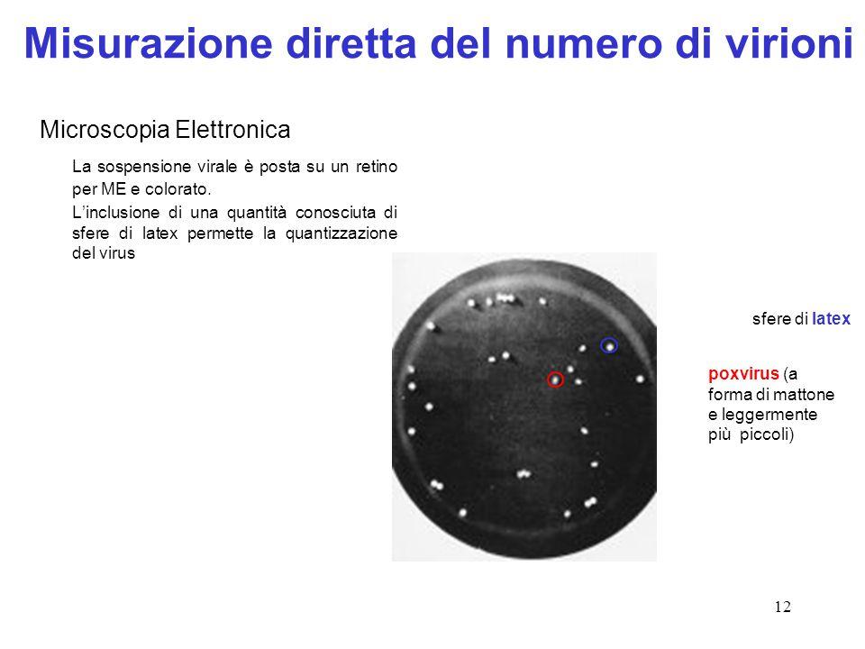 12 Misurazione diretta del numero di virioni Microscopia Elettronica La sospensione virale è posta su un retino per ME e colorato. L'inclusione di una