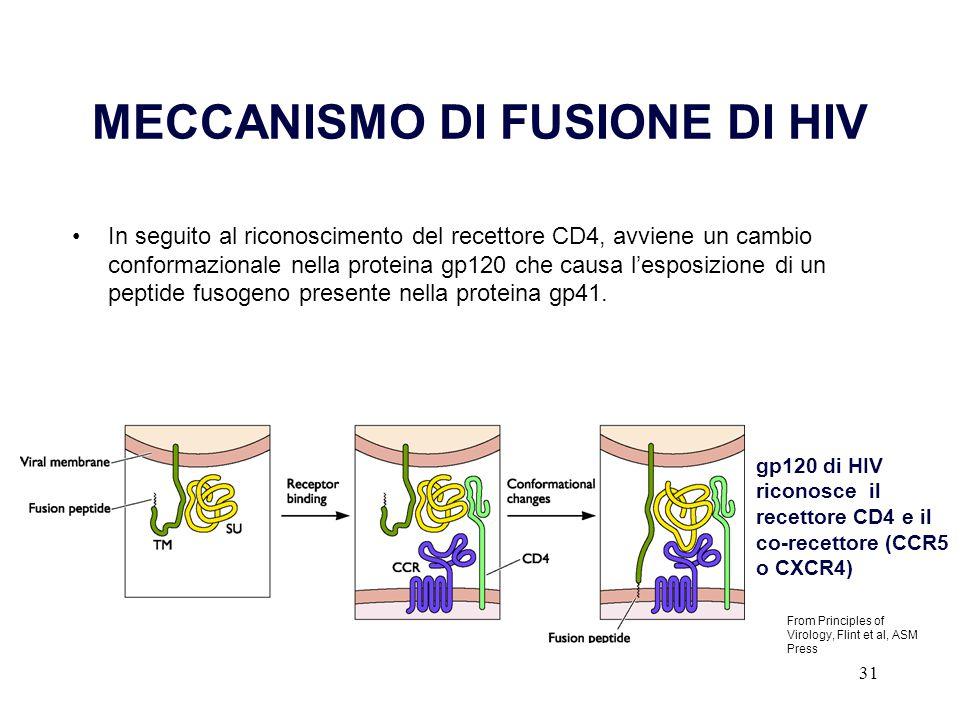 31 MECCANISMO DI FUSIONE DI HIV In seguito al riconoscimento del recettore CD4, avviene un cambio conformazionale nella proteina gp120 che causa l'esp