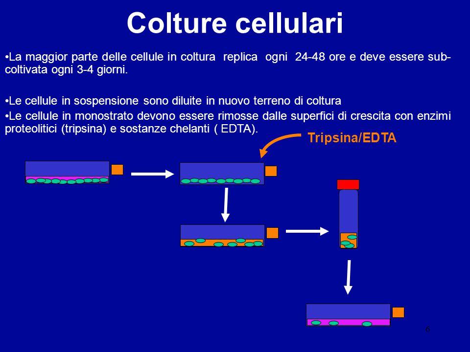 6 La maggior parte delle cellule in coltura replica ogni 24-48 ore e deve essere sub- coltivata ogni 3-4 giorni. Le cellule in sospensione sono diluit