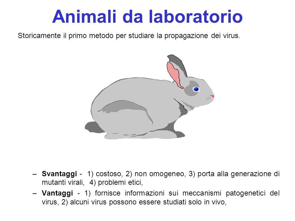 9 Animali da laboratorio Storicamente il primo metodo per studiare la propagazione dei virus. –Svantaggi - 1) costoso, 2) non omogeneo, 3) porta alla