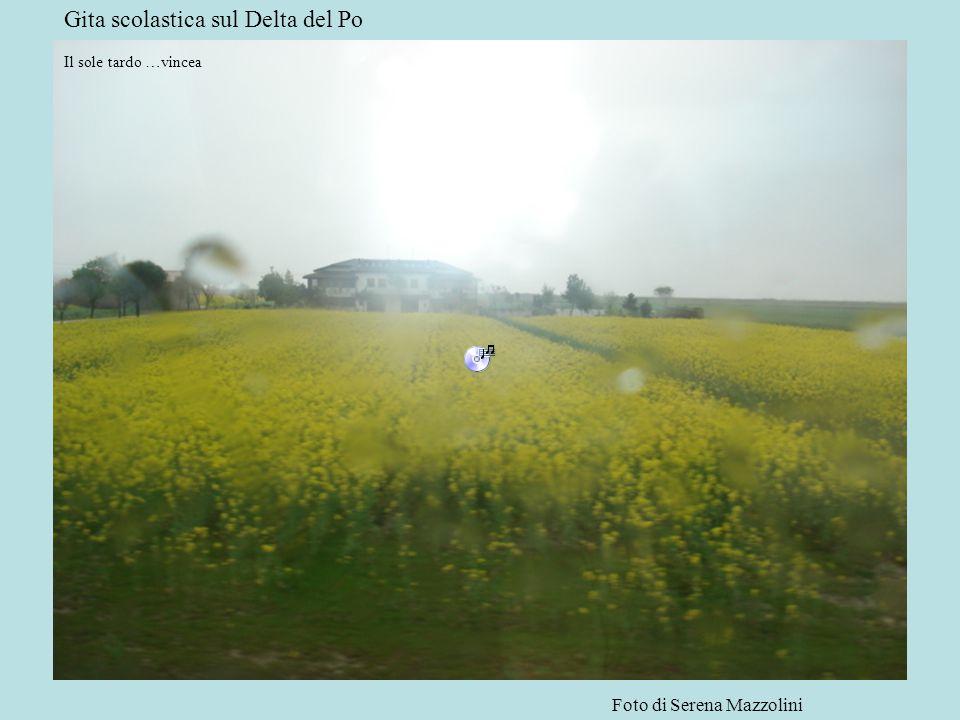 Gita scolastica sul Delta del Po Il sole tardo …vincea Foto di Serena Mazzolini