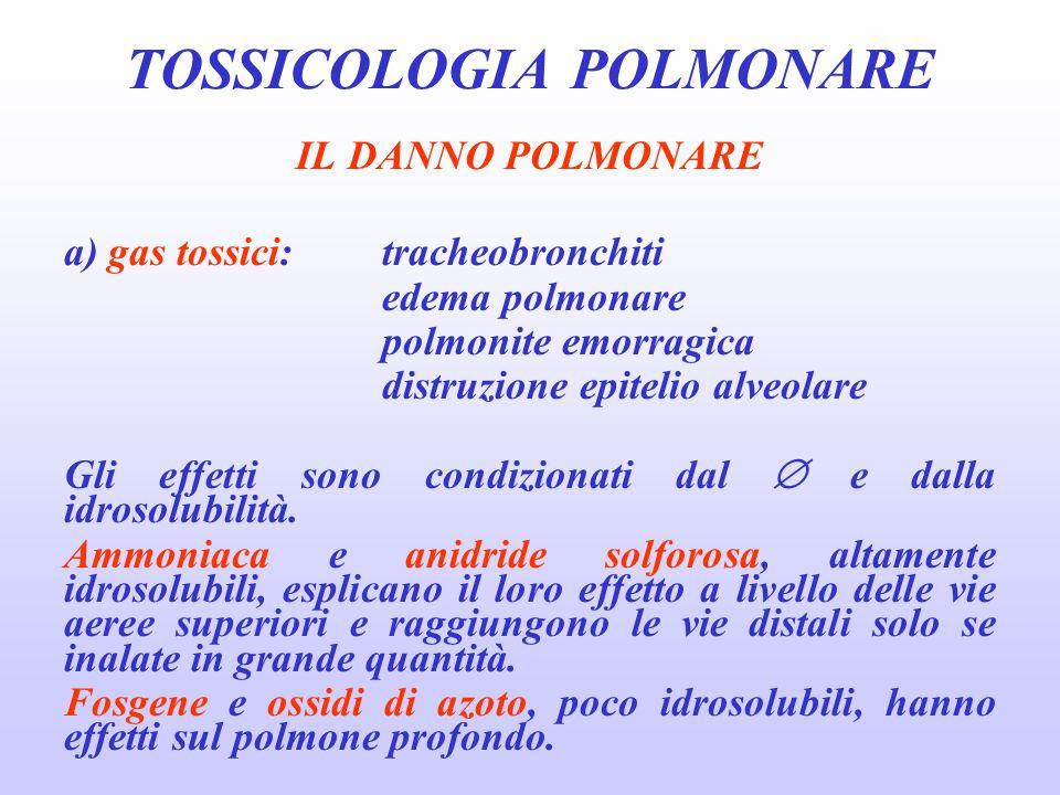 IL DANNO POLMONARE a) gas tossici:tracheobronchiti edema polmonare polmonite emorragica distruzione epitelio alveolare Gli effetti sono condizionati d