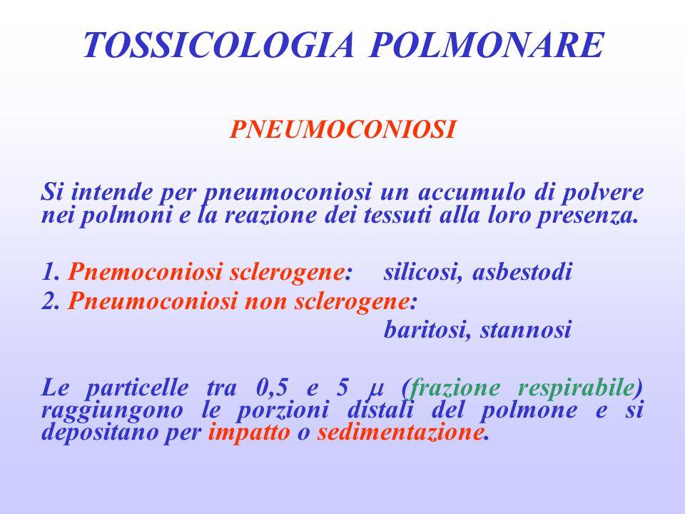 PNEUMOCONIOSI Si intende per pneumoconiosi un accumulo di polvere nei polmoni e la reazione dei tessuti alla loro presenza. 1. Pnemoconiosi sclerogene