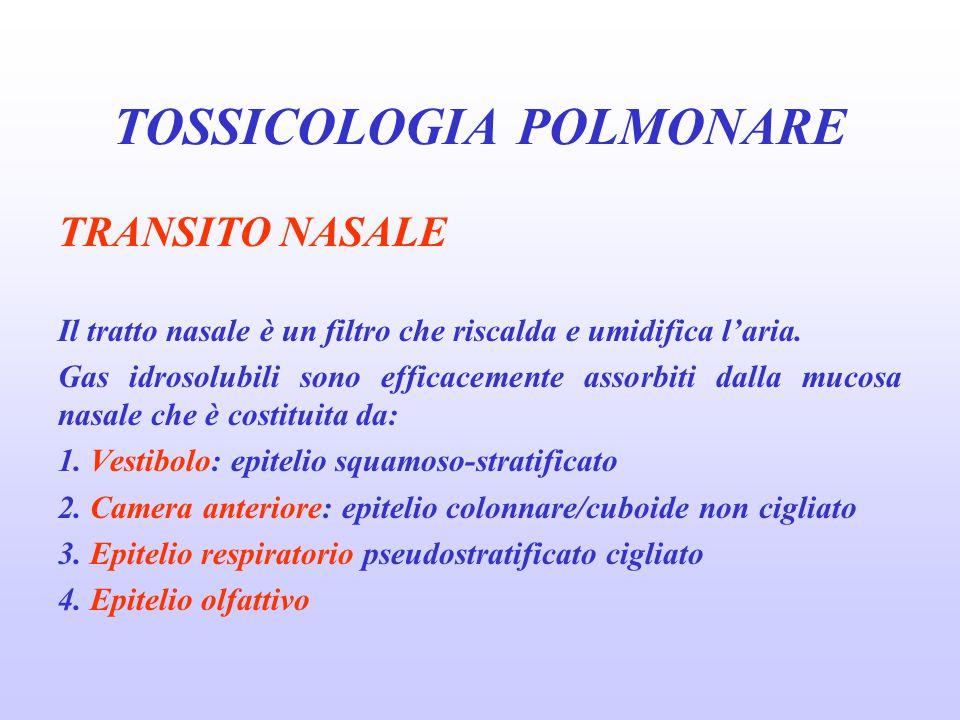 DIAGNOSI c) altre indagini esame dell'espettorato studio del BAL studio con biopsie bronchiali e transbronchiali test cutanei per atopia dosaggio IgE totali TOSSICOLOGIA POLMONARE