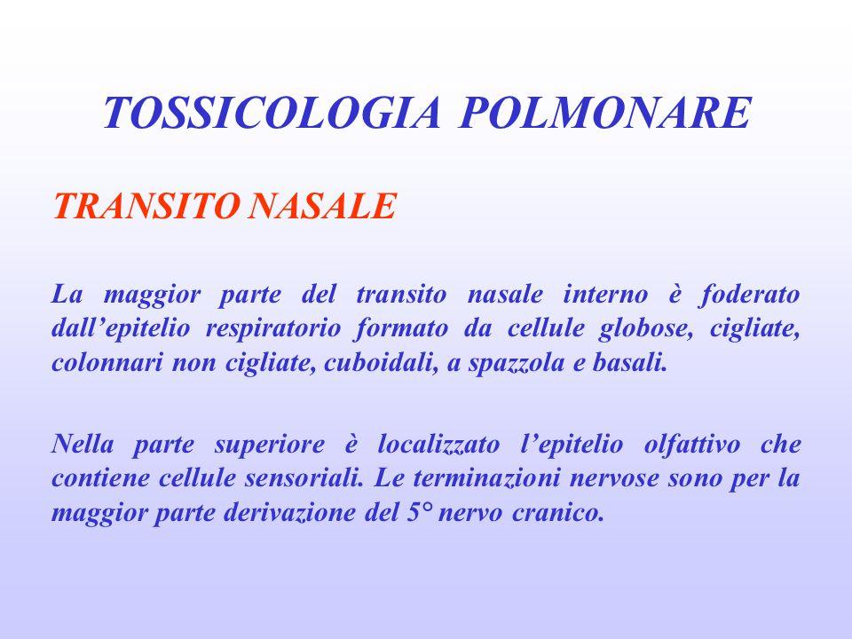 PRINCIPI GENERALI NELLA PATOGENESI DEL DANNO POLMONARE CAUSATO DAGLI XENOBIOTICI relativamente insolubili: ozono e ossidi di azoto penetrano profondamente nel polmone.
