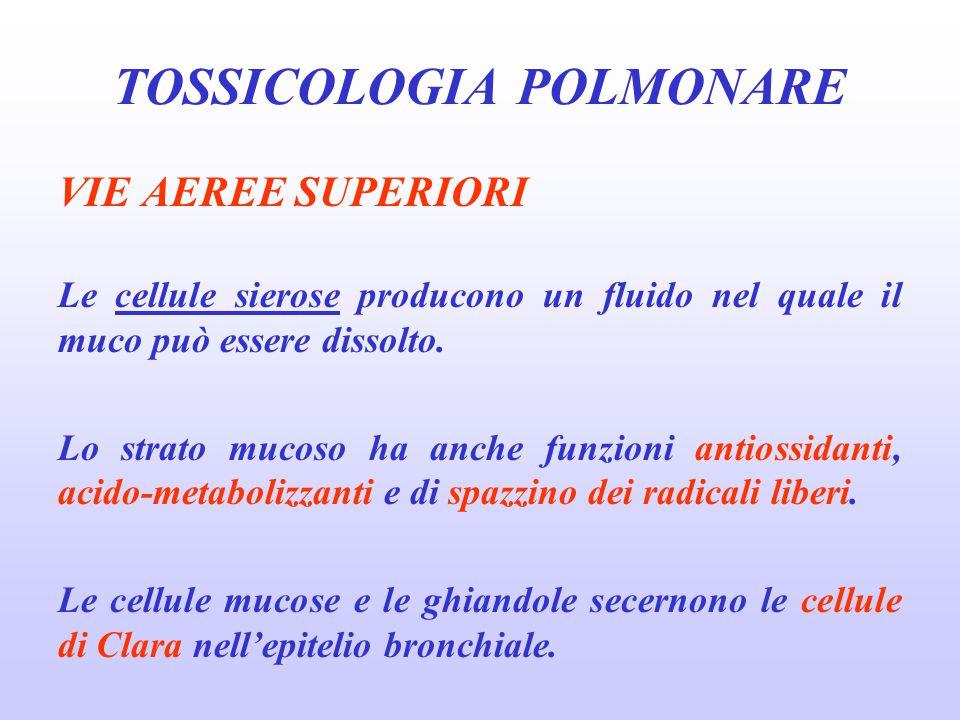 ASBESTOSI Fibrosi polmonare interstiziale, causata dall'esposizione a polveri contenenti asbesto (amianto.