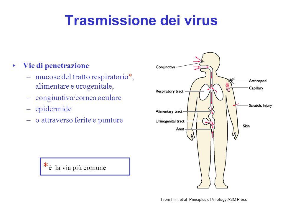 Trasmissione dei virus Vie di penetrazione –mucose del tratto respiratorio*, alimentare e urogenitale, –congiuntiva/cornea oculare –epidermide –o attr