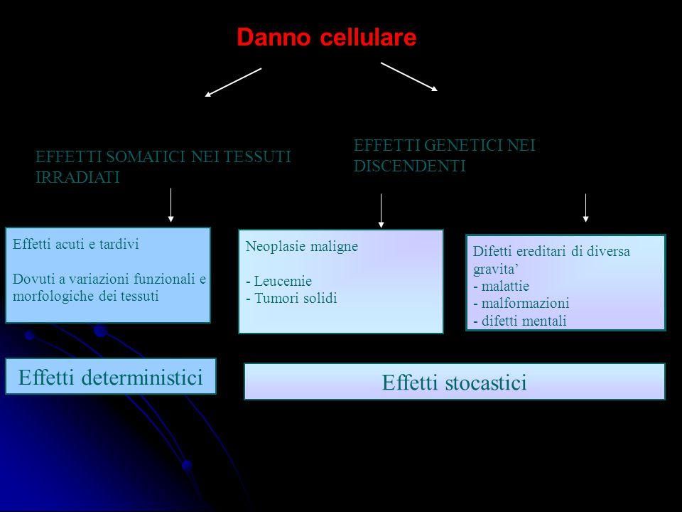 Effetti acuti e tardivi Dovuti a variazioni funzionali e morfologiche dei tessuti Neoplasie maligne - Leucemie - Tumori solidi Difetti ereditari di diversa gravita' - malattie - malformazioni - difetti mentali EFFETTI SOMATICI NEI TESSUTI IRRADIATI Effetti deterministici Effetti stocastici Danno cellulare EFFETTI GENETICI NEI DISCENDENTI