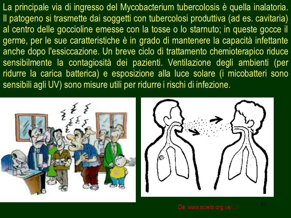 10 La principale via di ingresso del Mycobacterium tubercolosis è quella inalatoria.