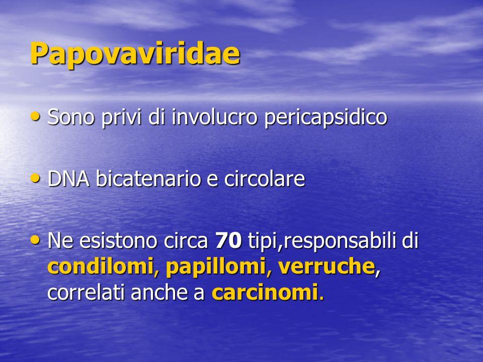 Papovaviridae Sono privi di involucro pericapsidico Sono privi di involucro pericapsidico DNA bicatenario e circolare DNA bicatenario e circolare Ne esistono circa 70 tipi,responsabili di condilomi, papillomi, verruche, correlati anche a carcinomi.