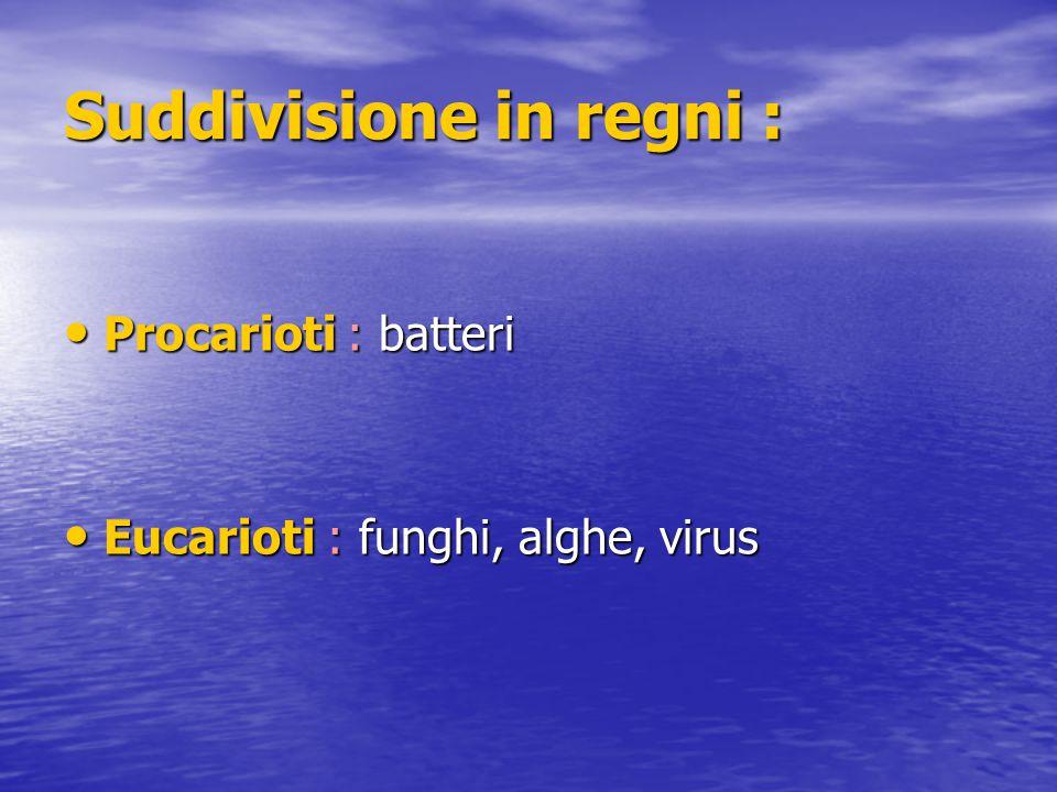Suddivisione in regni : Procarioti : batteri Procarioti : batteri Eucarioti : funghi, alghe, virus Eucarioti : funghi, alghe, virus