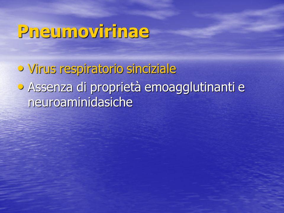 Pneumovirinae Virus respiratorio sinciziale Virus respiratorio sinciziale Assenza di proprietà emoagglutinanti e neuroaminidasiche Assenza di proprietà emoagglutinanti e neuroaminidasiche