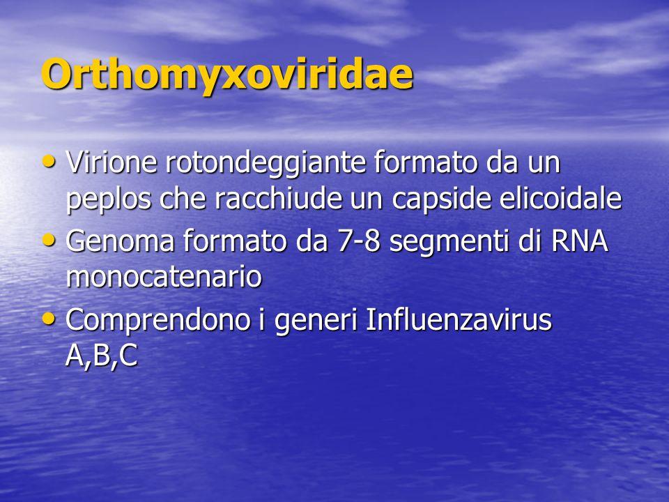 Orthomyxoviridae Virione rotondeggiante formato da un peplos che racchiude un capside elicoidale Virione rotondeggiante formato da un peplos che racchiude un capside elicoidale Genoma formato da 7-8 segmenti di RNA monocatenario Genoma formato da 7-8 segmenti di RNA monocatenario Comprendono i generi Influenzavirus A,B,C Comprendono i generi Influenzavirus A,B,C
