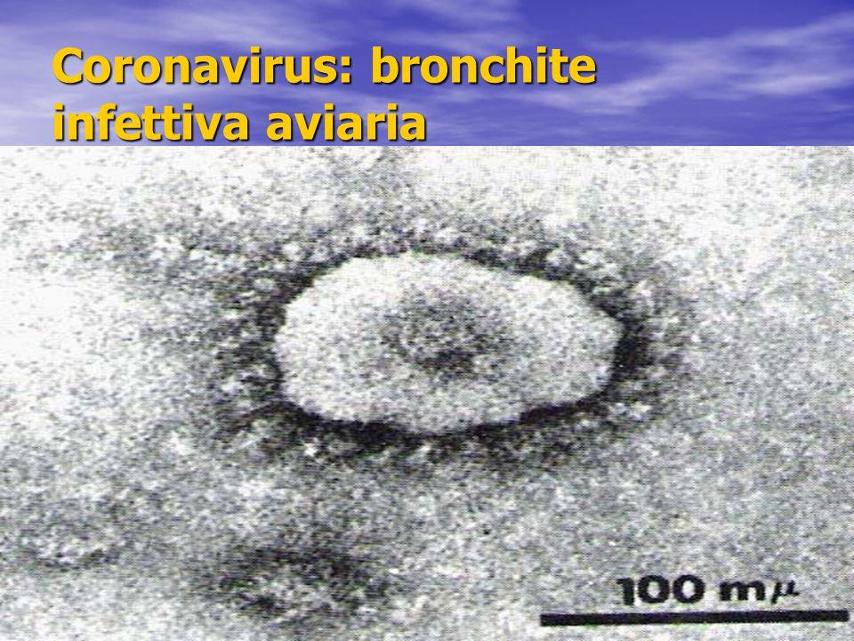 Coronavirus: bronchite infettiva aviaria