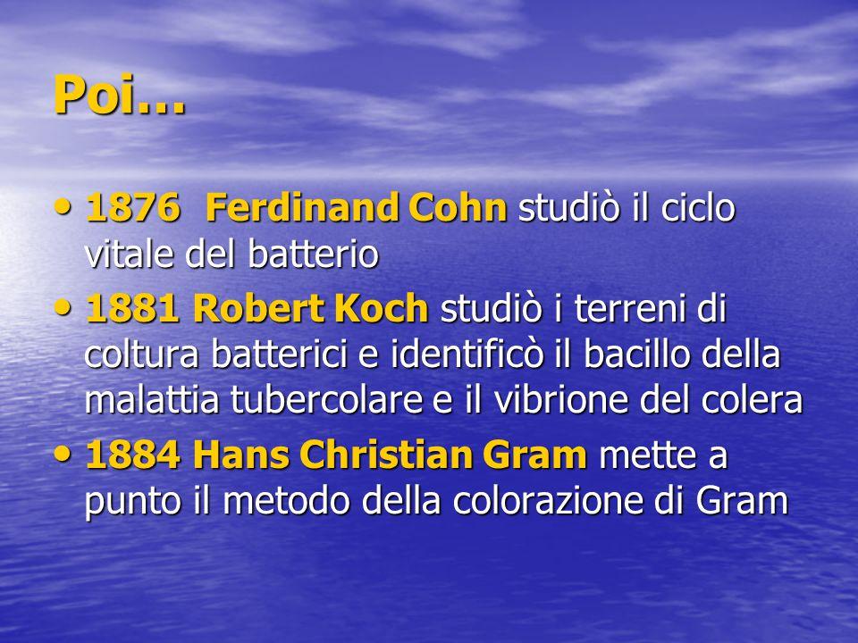 Poi… 1876 Ferdinand Cohn studiò il ciclo vitale del batterio 1876 Ferdinand Cohn studiò il ciclo vitale del batterio 1881 Robert Koch studiò i terreni di coltura batterici e identificò il bacillo della malattia tubercolare e il vibrione del colera 1881 Robert Koch studiò i terreni di coltura batterici e identificò il bacillo della malattia tubercolare e il vibrione del colera 1884 Hans Christian Gram mette a punto il metodo della colorazione di Gram 1884 Hans Christian Gram mette a punto il metodo della colorazione di Gram