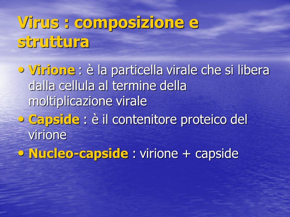 Virus : composizione e struttura Virione : è la particella virale che si libera dalla cellula al termine della moltiplicazione virale Virione : è la particella virale che si libera dalla cellula al termine della moltiplicazione virale Capside : è il contenitore proteico del virione Capside : è il contenitore proteico del virione Nucleo-capside : virione + capside Nucleo-capside : virione + capside
