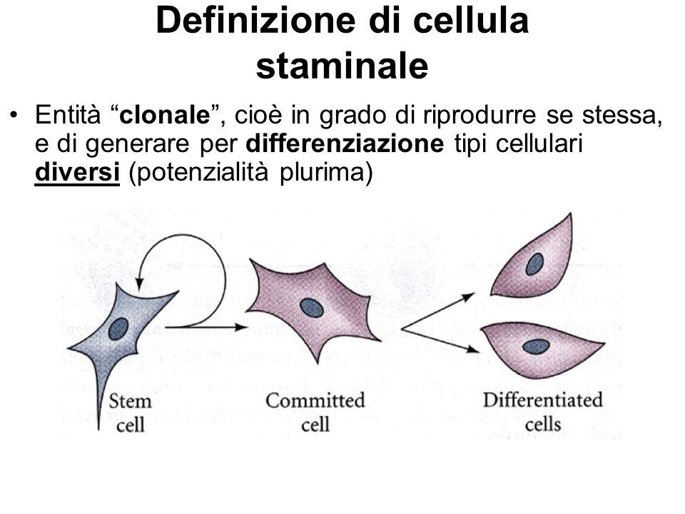 """Definizione di cellula staminale Entità """"clonale"""", cioè in grado di riprodurre se stessa, e di generare per differenziazione tipi cellulari diversi (p"""