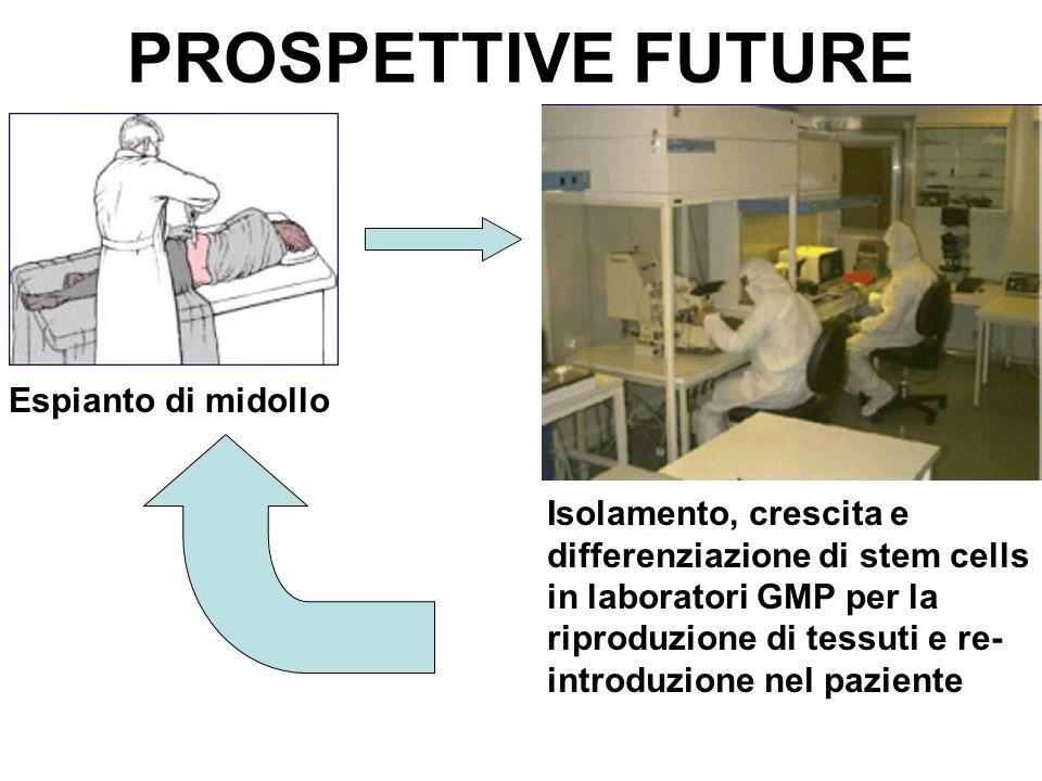 PROSPETTIVE FUTURE Espianto di midollo Isolamento, crescita e differenziazione di stem cells in laboratori GMP per la riproduzione di tessuti e re- in