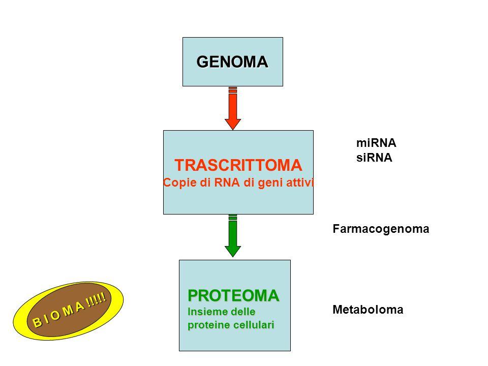 GENOMA TRASCRITTOMA Copie di RNA di geni attivi PROTEOMA Insieme delle proteine cellulari Farmacogenoma Metaboloma miRNA siRNA B I O M A !!!!!