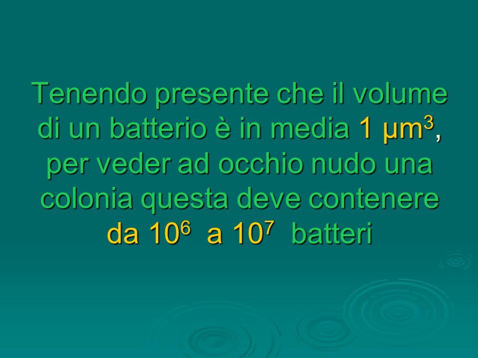 Tenendo presente che il volume di un batterio è in media 1 μm 3, per veder ad occhio nudo una colonia questa deve contenere da 10 6 a 10 7 batteri