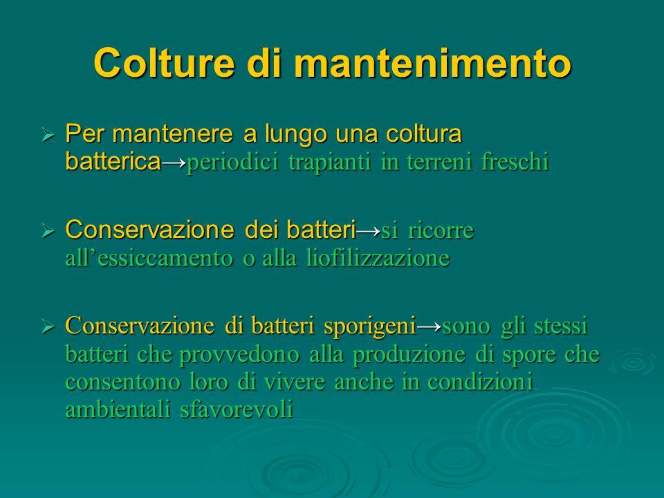 Colture di mantenimento  Per mantenere a lungo una coltura batterica →periodici trapianti in terreni freschi  Conservazione dei batteri →si ricorre