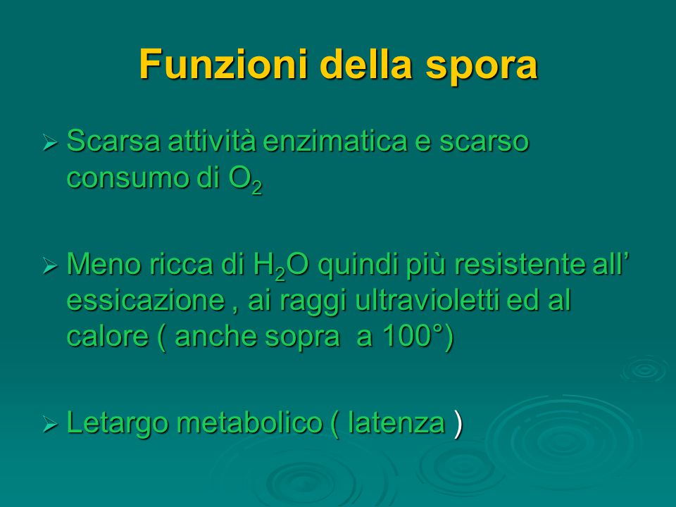 Funzioni della spora  Scarsa attività enzimatica e scarso consumo di O 2  Meno ricca di H 2 O quindi più resistente all' essicazione, ai raggi ultravioletti ed al calore ( anche sopra a 100°)  Letargo metabolico ( latenza )