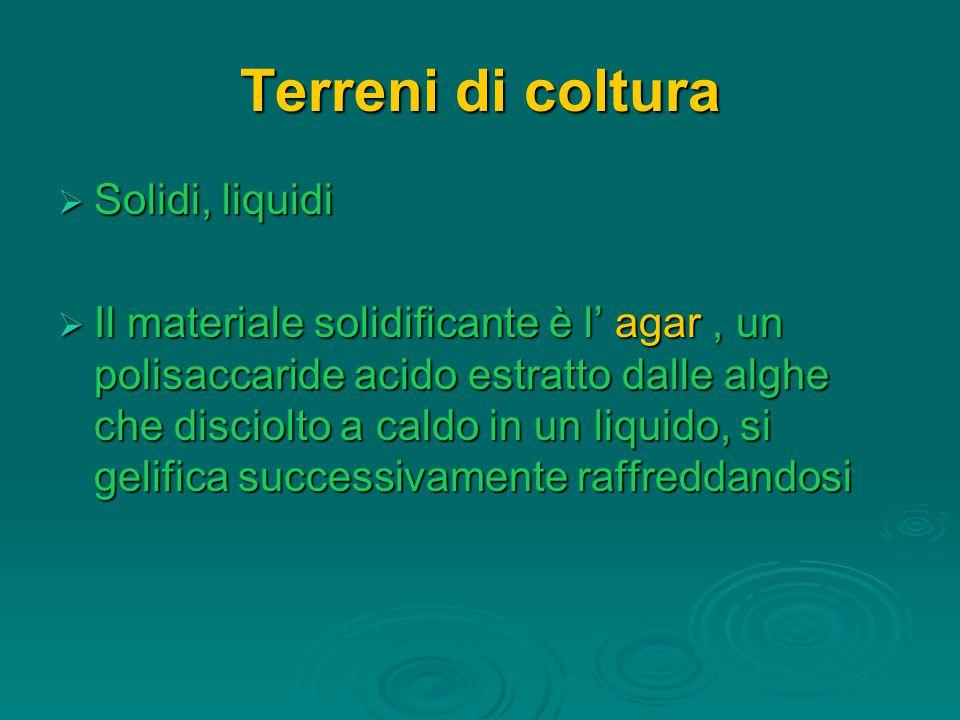 Terreni di coltura  Solidi, liquidi  Il materiale solidificante è l' agar, un polisaccaride acido estratto dalle alghe che disciolto a caldo in un liquido, si gelifica successivamente raffreddandosi