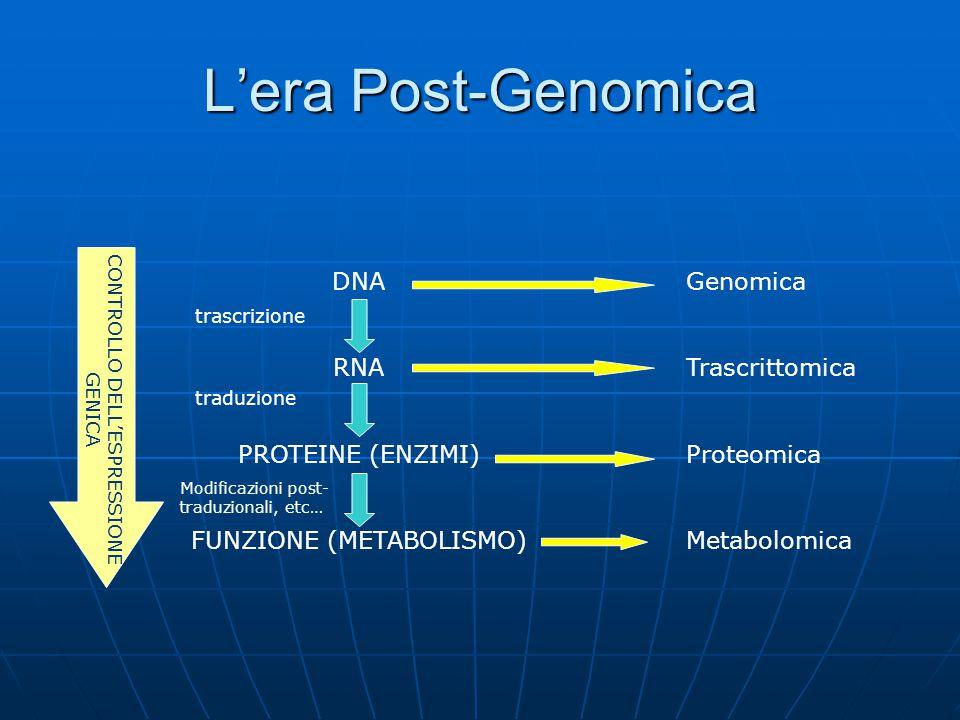 L'era Post-Genomica DNA RNA PROTEINE (ENZIMI) FUNZIONE (METABOLISMO) Genomica Trascrittomica Proteomica Metabolomica CONTROLLO DELL'ESPRESSIONE GENICA trascrizione traduzione Modificazioni post- traduzionali, etc…