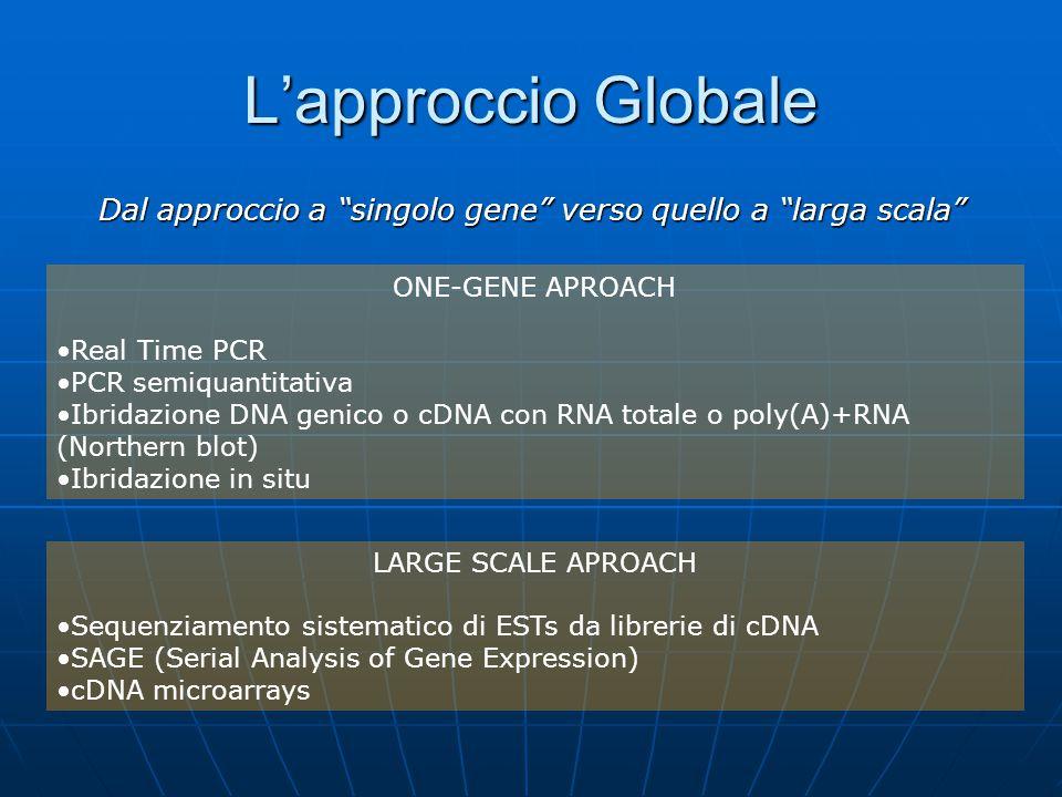 """L'approccio Globale Dal approccio a """"singolo gene"""" verso quello a """"larga scala"""" ONE-GENE APROACH Real Time PCR PCR semiquantitativa Ibridazione DNA ge"""