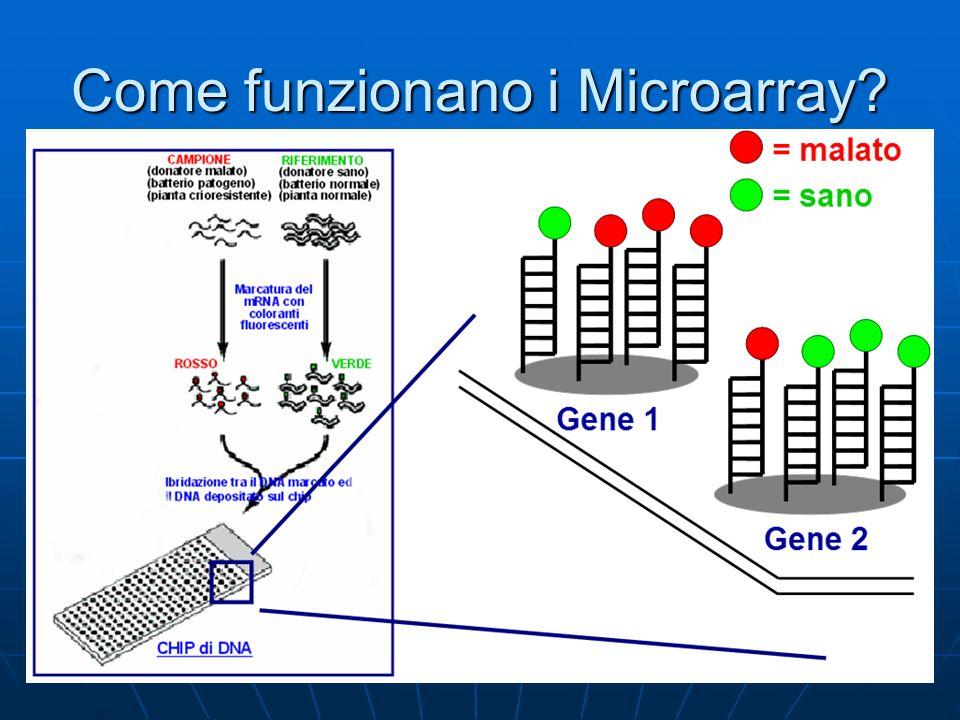 Diversi tipi di Microarray - cDNA Microarray Più vecchi, meno efficienti.
