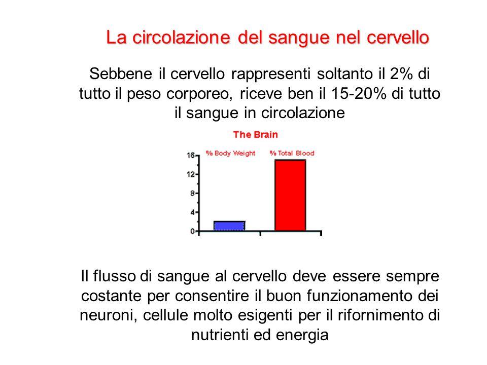 La circolazione del sangue nel cervello Sebbene il cervello rappresenti soltanto il 2% di tutto il peso corporeo, riceve ben il 15-20% di tutto il san