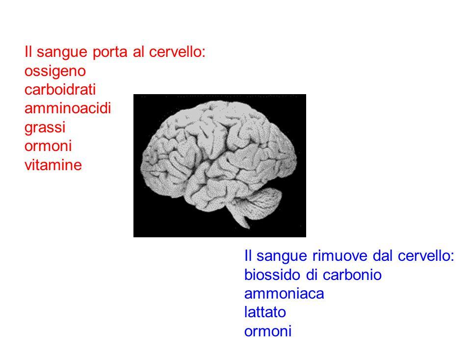 Il sangue porta al cervello: ossigeno carboidrati amminoacidi grassi ormoni vitamine Il sangue rimuove dal cervello: biossido di carbonio ammoniaca la