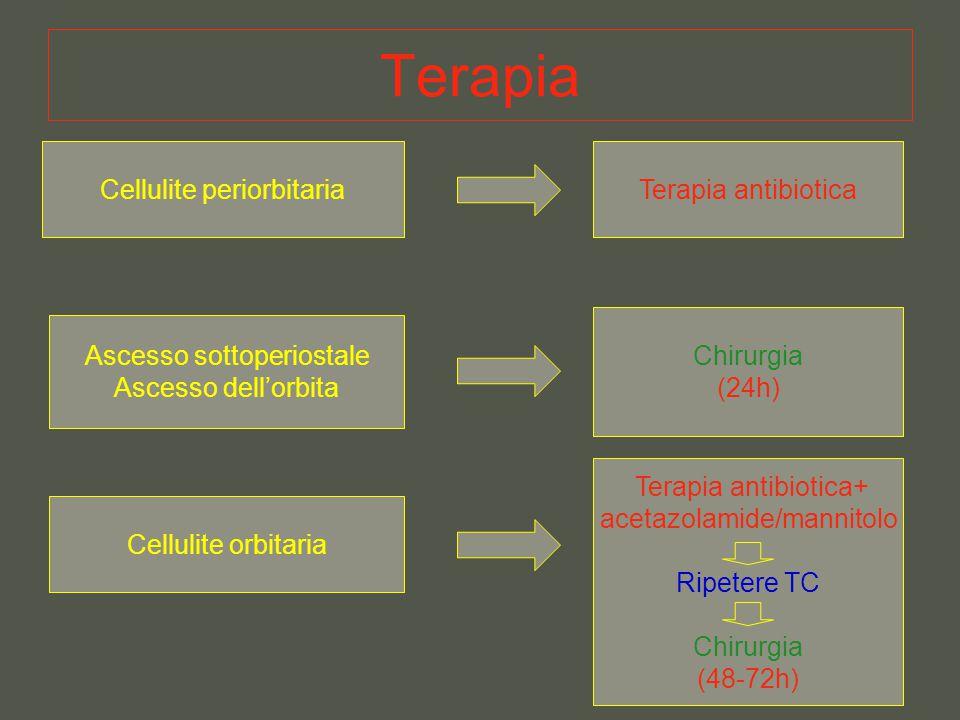 Terapia Cellulite periorbitariaTerapia antibiotica Ascesso sottoperiostale Ascesso dell'orbita Chirurgia (24h) Cellulite orbitaria Terapia antibiotica
