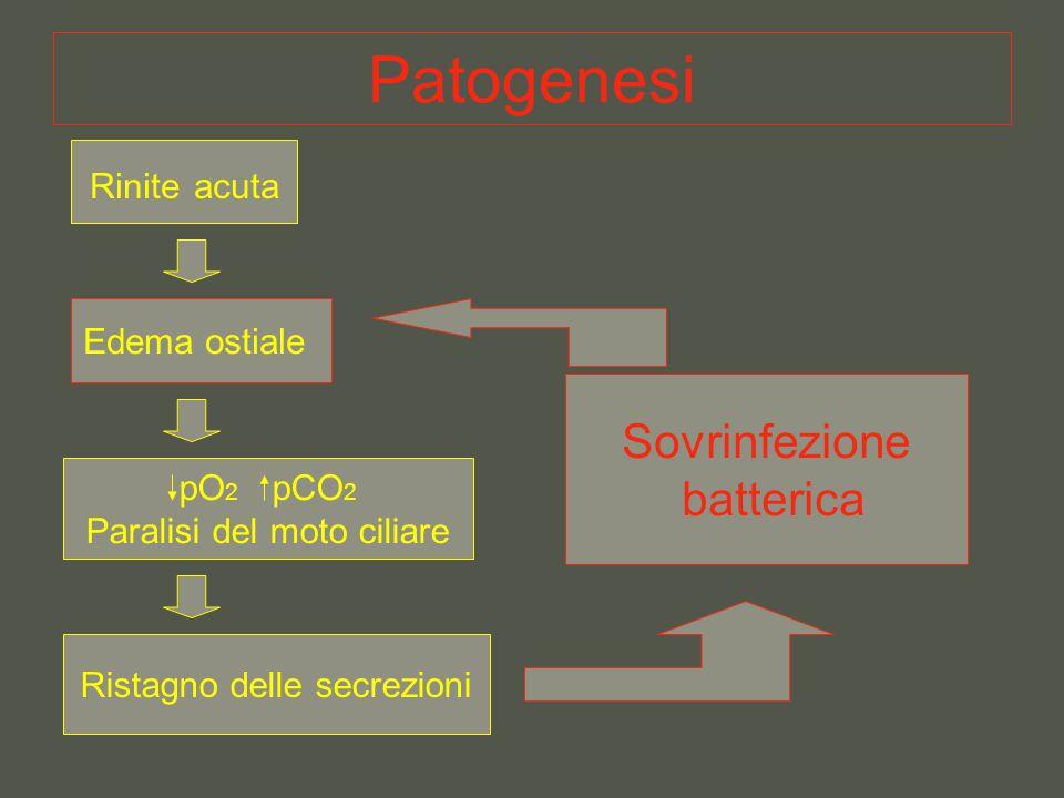 Patogenesi Rinite acuta Edema ostiale pO 2 pCO 2 Paralisi del moto ciliare Ristagno delle secrezioni Sovrinfezione batterica