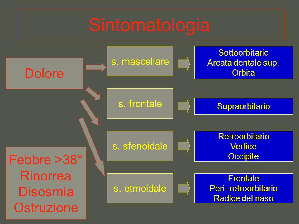 Sintomatologia Dolore s. mascellare Sottoorbitario Arcata dentale sup. Orbita s. frontale Sopraorbitario Retroorbitario Vertice Occipite s. sfenoidale