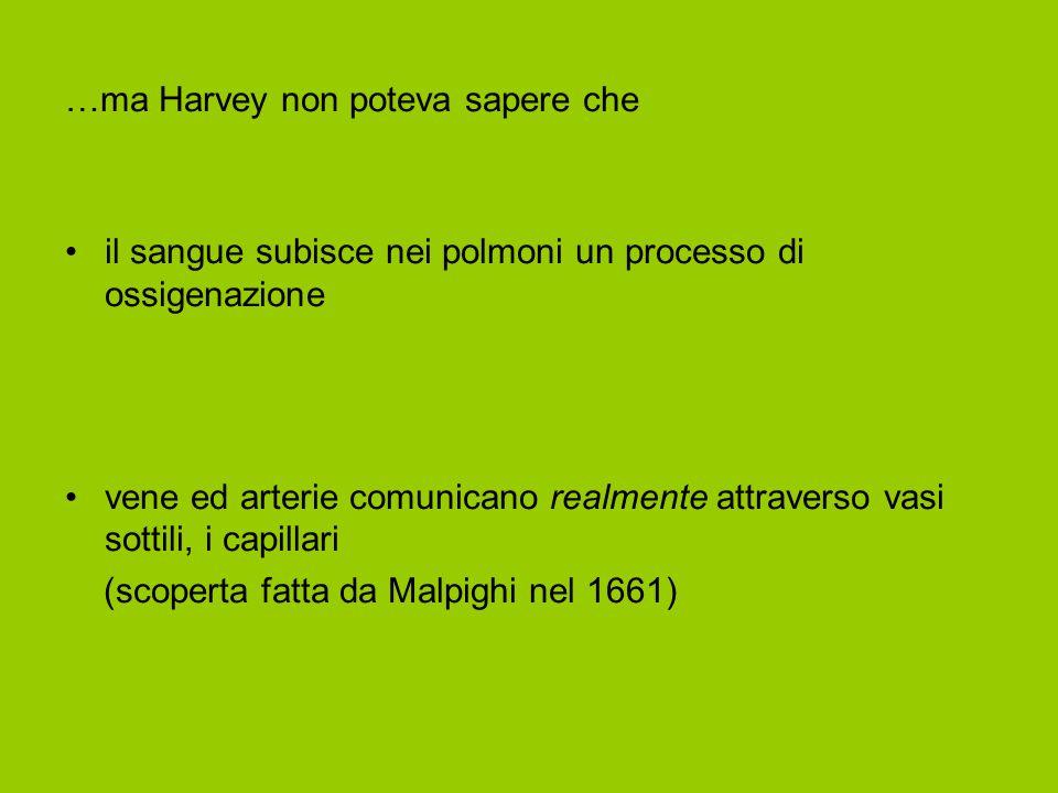 …ma Harvey non poteva sapere che il sangue subisce nei polmoni un processo di ossigenazione vene ed arterie comunicano realmente attraverso vasi sottili, i capillari (scoperta fatta da Malpighi nel 1661)