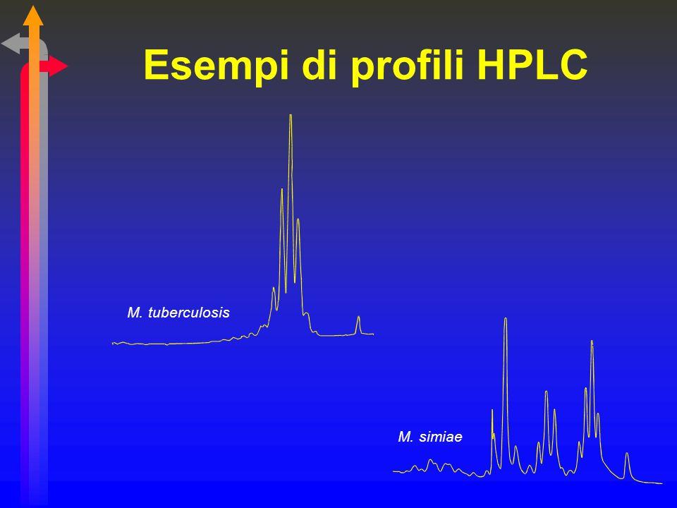 Esempi di profili HPLC M. tuberculosis M. simiae