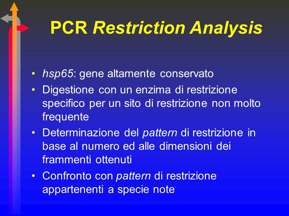 PCR Restriction Analysis hsp65: gene altamente conservato Digestione con un enzima di restrizione specifico per un sito di restrizione non molto frequ