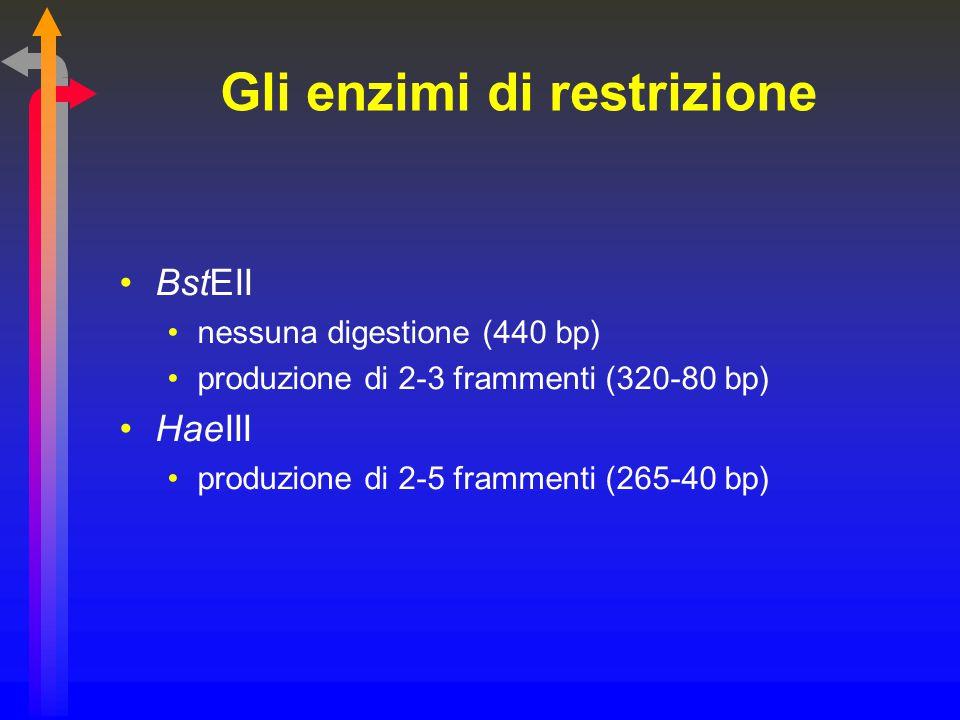 Gli enzimi di restrizione BstEII nessuna digestione (440 bp) produzione di 2-3 frammenti (320-80 bp) HaeIII produzione di 2-5 frammenti (265-40 bp)
