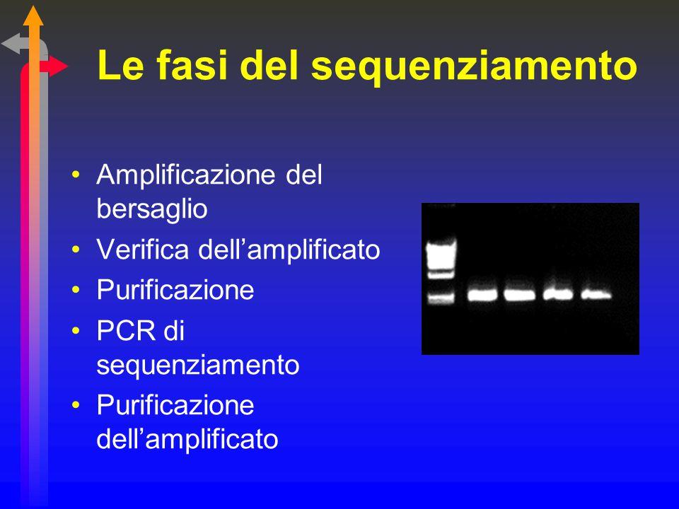 Le fasi del sequenziamento Amplificazione del bersaglio Verifica dell'amplificato Purificazione PCR di sequenziamento Purificazione dell'amplificato