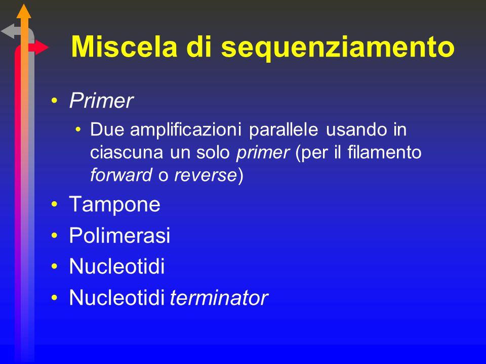 Miscela di sequenziamento Primer Due amplificazioni parallele usando in ciascuna un solo primer (per il filamento forward o reverse) Tampone Polimeras