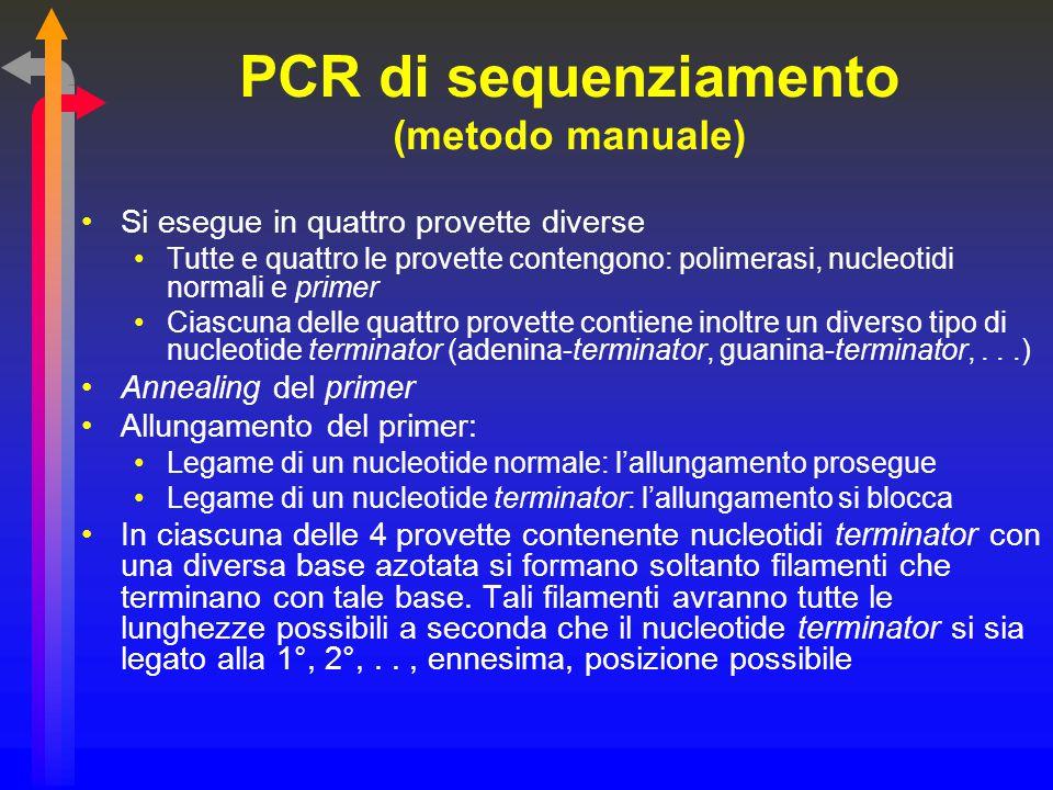 PCR di sequenziamento (metodo manuale) Si esegue in quattro provette diverse Tutte e quattro le provette contengono: polimerasi, nucleotidi normali e