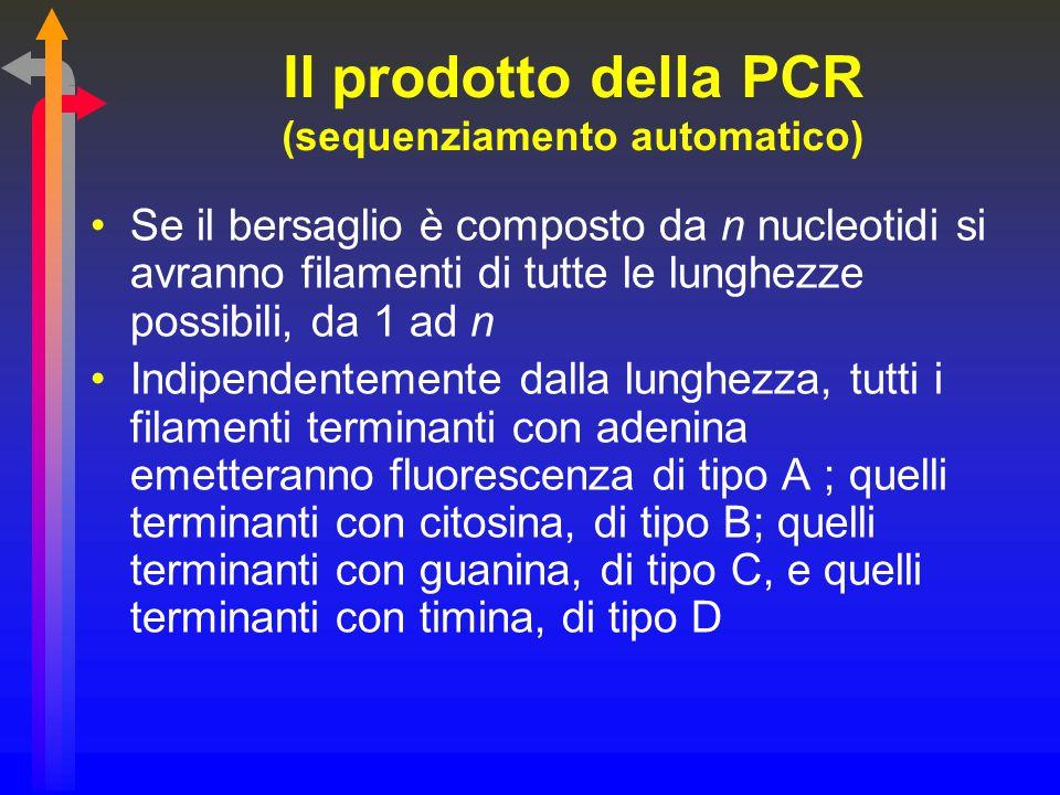 Il prodotto della PCR (sequenziamento automatico) Se il bersaglio è composto da n nucleotidi si avranno filamenti di tutte le lunghezze possibili, da